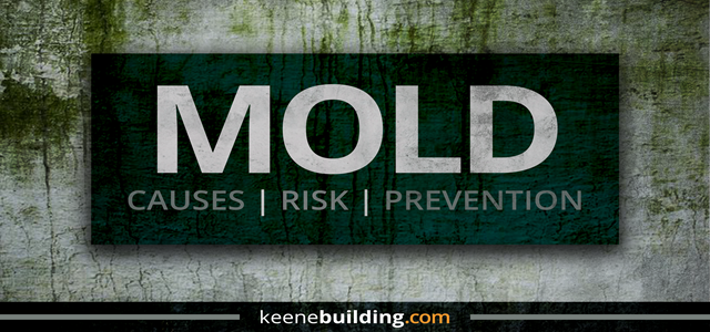 Mold: Causes, Risk, and Prevention